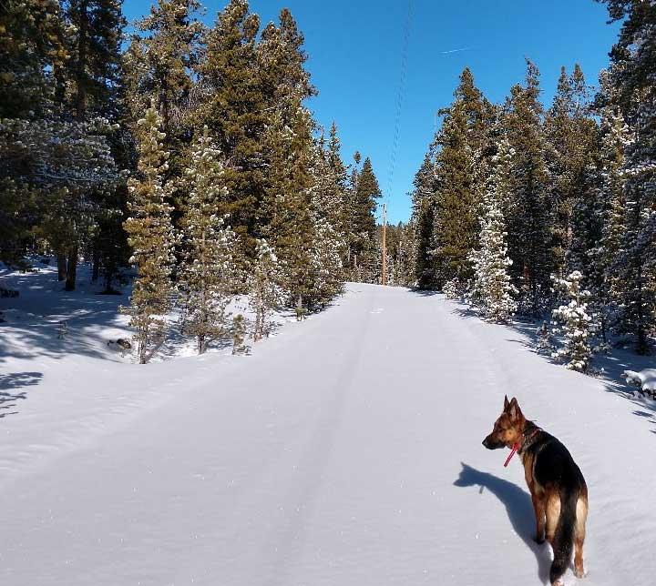 best-beginner-cross-country-skiing-wyoming